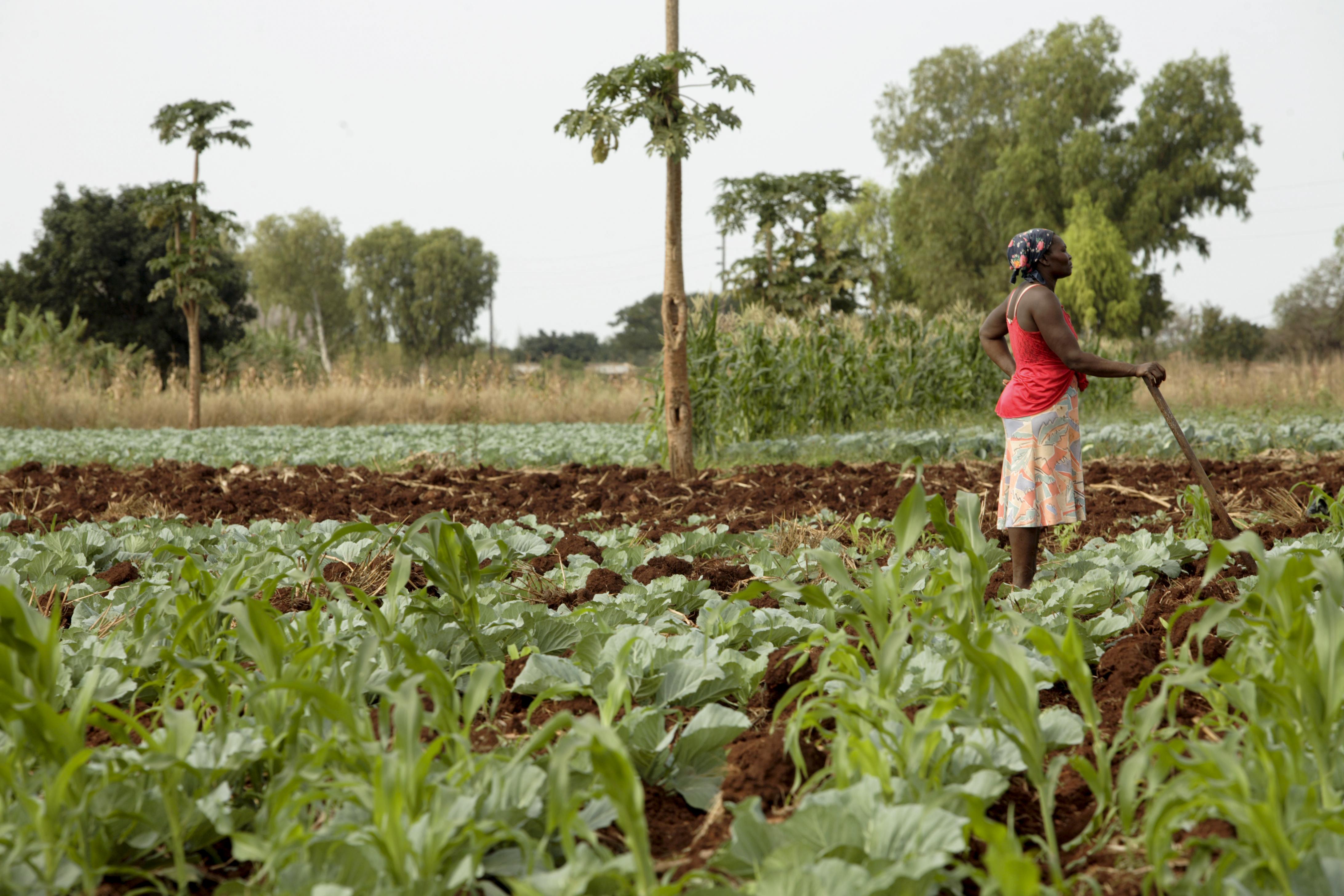 Resultado de imagen para agricultura